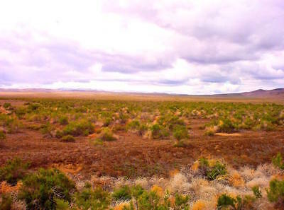 """40 Acre Nevada Ranch """"King's River Valley"""" Only $295 Down Financed @ 0% Interest 5"""