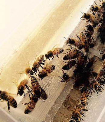 Beekeeping hive MULTI PURPOSE 1Litre / 2pt MILLER FEEDER 2