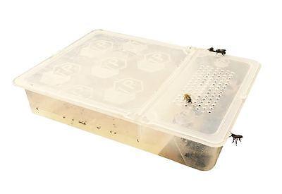 Beekeeping hive MULTI PURPOSE 1Litre / 2pt MILLER FEEDER 4