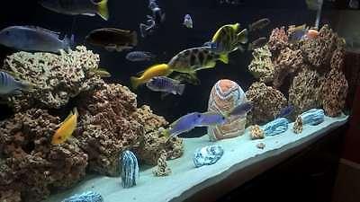 10 Kg Red Limestone Ocean Rock For Malawi Cichlid Aquarium Fish Tank Stones 4