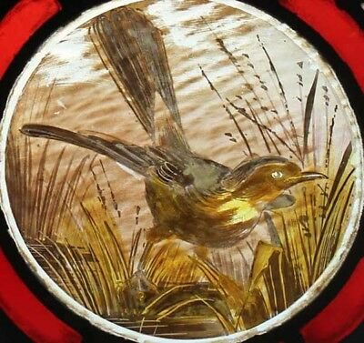 Victorian Painted Bird Antique English Stained Glass Window