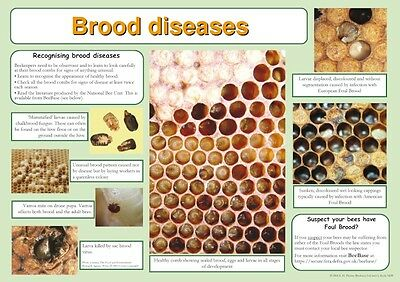 APICULTURE posters, ensemble de 9, inclus Alimentation, RUCHES, maladie, Swarm ,