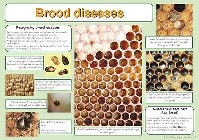 Beekeeping Posters, set of 9, includes feeding, hives, disease, swarm, dance 3 • EUR 21,88