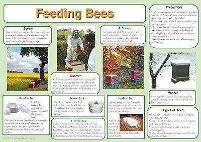 Beekeeping Posters, set of 9, includes feeding, hives, disease, swarm, dance 5 • EUR 21,88