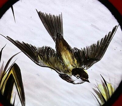 Stunning Painted Bird In Flight Antique English Stained Glass Window 2