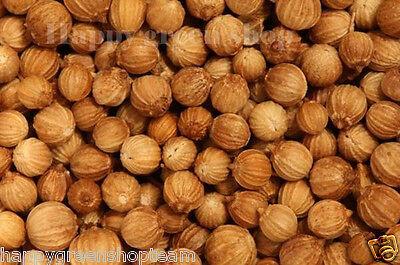 CORIANDER - 400 SEEDS - cilantro - Coriandrum sativum - Herb - HERBS 5