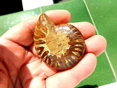"""Fosiles Ammonite """" Excelente Cleoniceras Irisado De Madagascar  -  6A19 """" 2"""