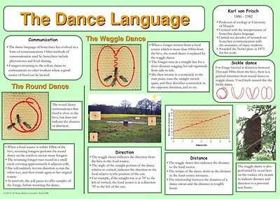 Beekeeping Posters, set of 9, includes feeding, hives, disease, swarm, dance 9
