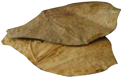 Dennerle Nano Catappa Indian Almond Leaves for Shrimp Discus Betta Fish 3