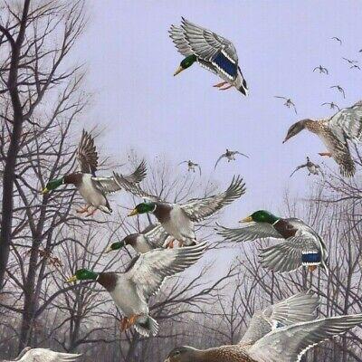 Pollard 2018 Arkansas Ducks Unlimited Print Signed AP Monday Morning Mallards
