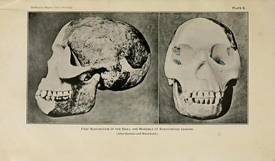 178 Rare Pre-Historic Man Books On Dvd- Primitive Human Fossils Stonehenge Flint 3