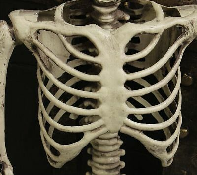 5.6ft Halloween Poseable Human Skeleton Full Life Size Props Party Decoration 2