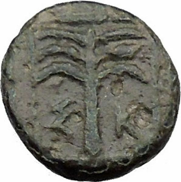 Skepsis in Troas 350BC Ancient Greek Coin Pegasus winged horse Fir tree  i31799 2