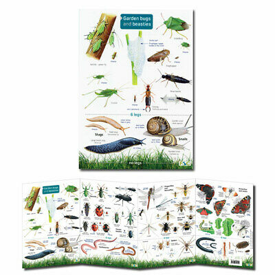 British Insects Laminated Field Guides Identification Posters Bugs Minibeasts 7