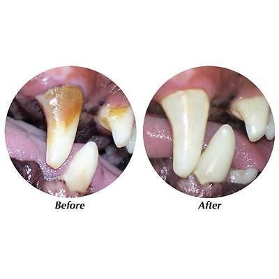 TropiClean Clean Teeth Gel For Dogs Promotes Strong Teeth & Healthy Gums 4 oz 3
