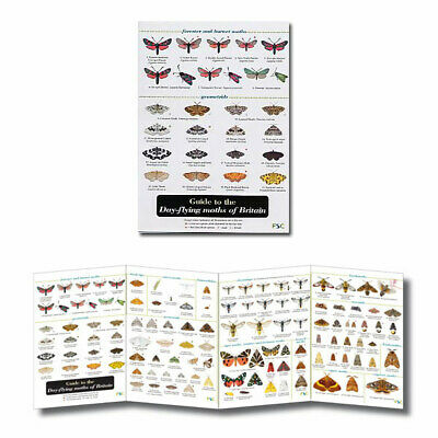 British Insects Laminated Field Guides Identification Posters Bugs Minibeasts 5