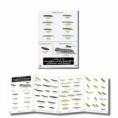 British Insects Laminated Field Guides Identification Posters Bugs Minibeasts 4