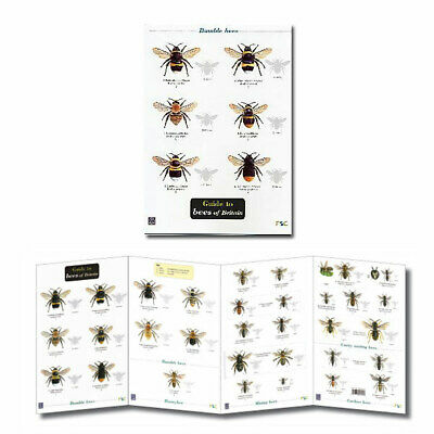 British Insects Laminated Field Guides Identification Posters Bugs Minibeasts 2