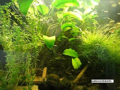 *100* Stück Düngekugeln - Pflanzendünger Aquarium Eisendünger behandelt NEU 2