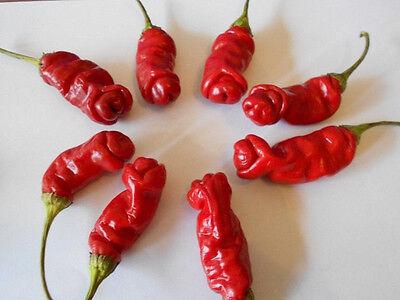 scharf-süße Kirsch-Chilli Cherry Bombe ☀ Gemüse Zimmerpflanze ☀ frisches Saatgut