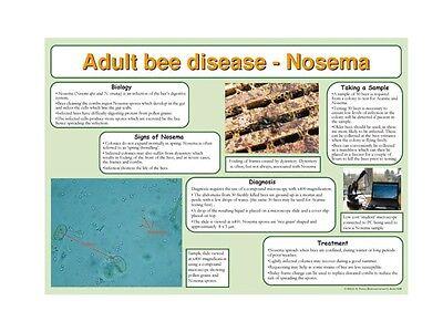 Beekeeping Posters, set of 9, includes feeding, hives, disease, swarm, dance 6 • EUR 21,88