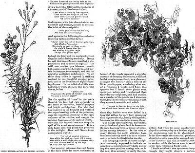 Night Garden A MIDNIGHT RAMBLE William Hamilton Gibson PRIMROSE Nasturtiums 1888 5