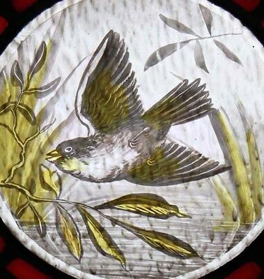 The Most Beautiful Rare Painted Bird Antique English Stained Glass Window 2