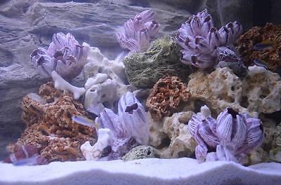 20 Kg Mixed Set Of Stones For Malawi Cichlid Tanganyika Aquarium Ocean Rock