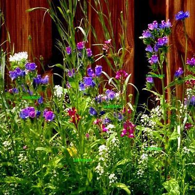 Ganz und zu Extrem BIENEN- UND HUMMELWIESE - Blumenmischung Blumenwiese Bienenweide @LW_77