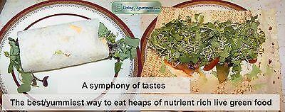 Lentil Red Sprout seeds 100g 400g 2kg