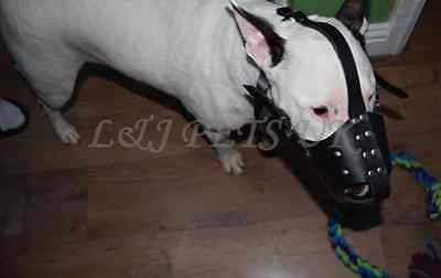 Strong  Leather Dog Muzzle for Bull Terrier and other similar snout