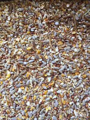 20kg ROBIN SONGBIRD WILD BIRD FOOD FEED SEED MIX WITH MEALWORMS ALL SEASONS 3