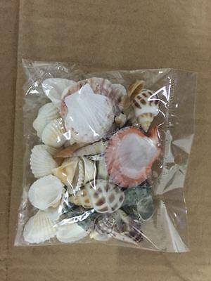 Beach Mixed Sea Shells Shell Craft Table Decor Aquarium Fish Tank Small Medium
