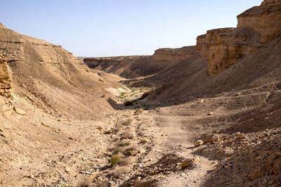 ⚱ Ancient • Prehistoric Neolithic Paleo • Flint Arrowhead • Dead Sea • Israel ⚱