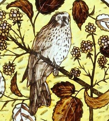Beautiful English Antique Painted Bird Of Prey Victorian Stained Glass Window