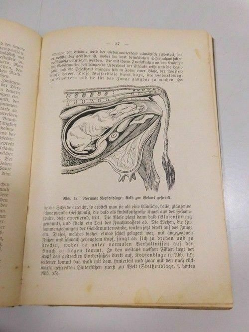 C. Nörner Geburtshilfe u. Geburtspflege praktischer Ratgeber Viehbesitzer 1921 5