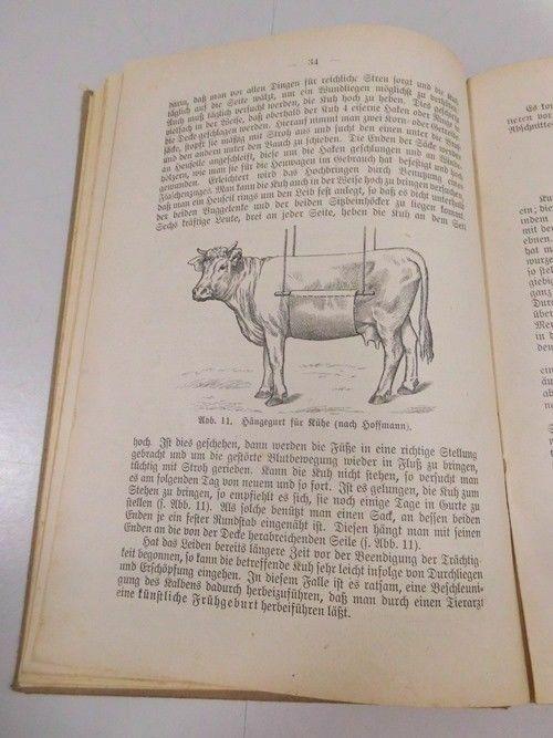 C. Nörner Geburtshilfe u. Geburtspflege praktischer Ratgeber Viehbesitzer 1921 4