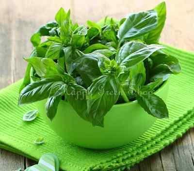 BASIL - ITALIAN GENOVESE 8100 seeds - ROYAL HERB - Ocimum Basilicum HERB 4
