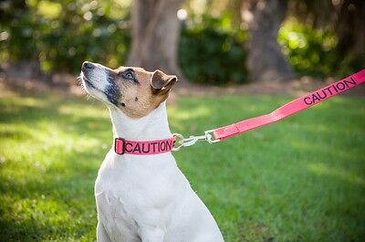 Warning Alert Dog Collar Lead Harness Coat! Award Winning Pet Product! Why Wait? 8