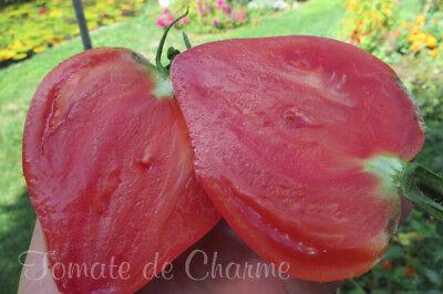 5 graines de tomate Batyanya précoce productive délicieuse heirloom tomato