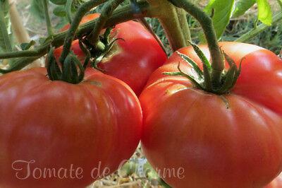 Vegetable Seeds 10 Graines De Tomate Rare Chio Chio San Pink Cherry Tomato Seeds Meth Bio Home Garden Leyendas Gob Pe