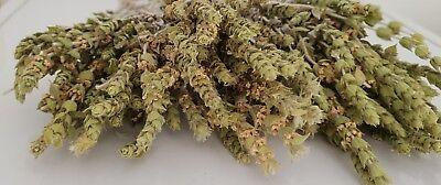 Griechischer Bergtee Sideritis Scardica Bio | 180g | Ernte 19 | Premium Qualität 7
