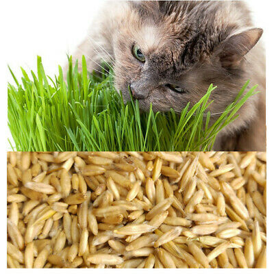 Organic Cat Oat Grass ~Fully grown in 14 days ~ Pets Love it! ~ BUY 2 GET 2 FREE 5