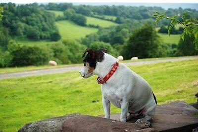 Beautiful holiday Cottage nr Hay On Wye Sleeps 4+2 24-27 July £350 dog friendly 10