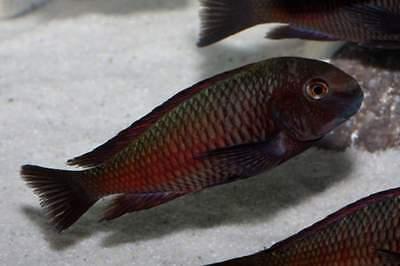 15 Kg Natural White Aquarium Silica Sand Types Of Aquariums 5