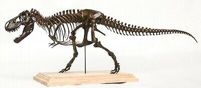 1/20 Tyrannosaurus Rex Trix Skeleton Model T-Rex Dinosaur Collector Toy 3D Print 4