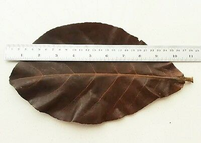 Cleaning & Maintenance 50pcs Indian Almond Leaves Teabag Pet Supplies Catappa Ketapang Easy Pack Treatment Betta Cheapest Price From Our Site