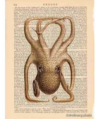 Choco Octopus #10 Art Print on Antique Book Page Vintage Illustration Tentacles