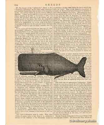 Whale Art Print on Antique Book Page Vintage Illustration