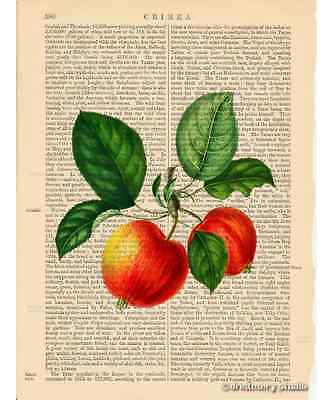 Red Apples Art Print on Antique Book Page Vintage Illustration Garden Fruits